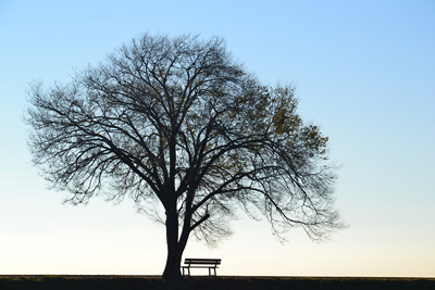 Tree and bench photo